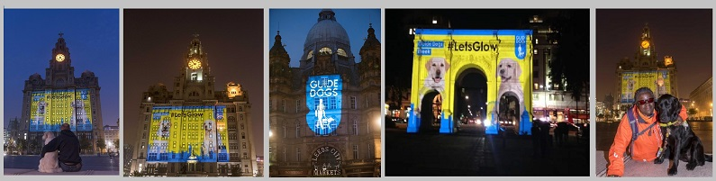 EMF LIVER BUILDING GUIDE DOG PROJECTION