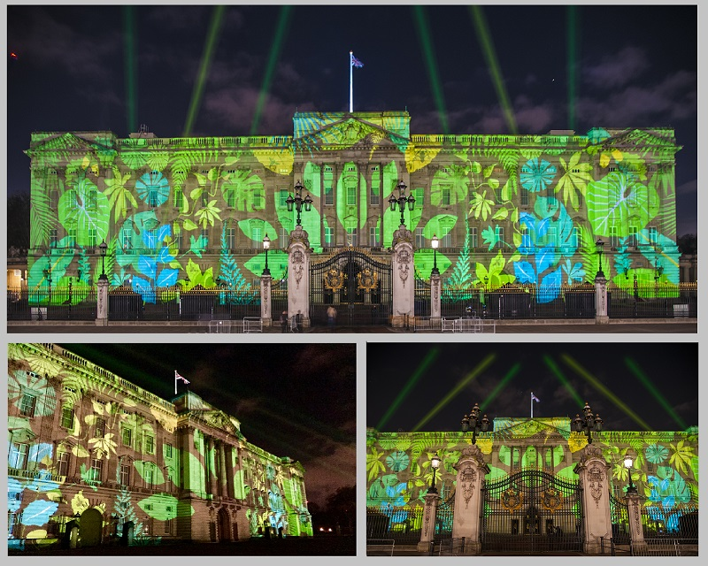 Rainforest projections Buckingham Palace